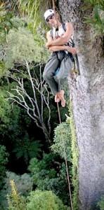 tallest_tree